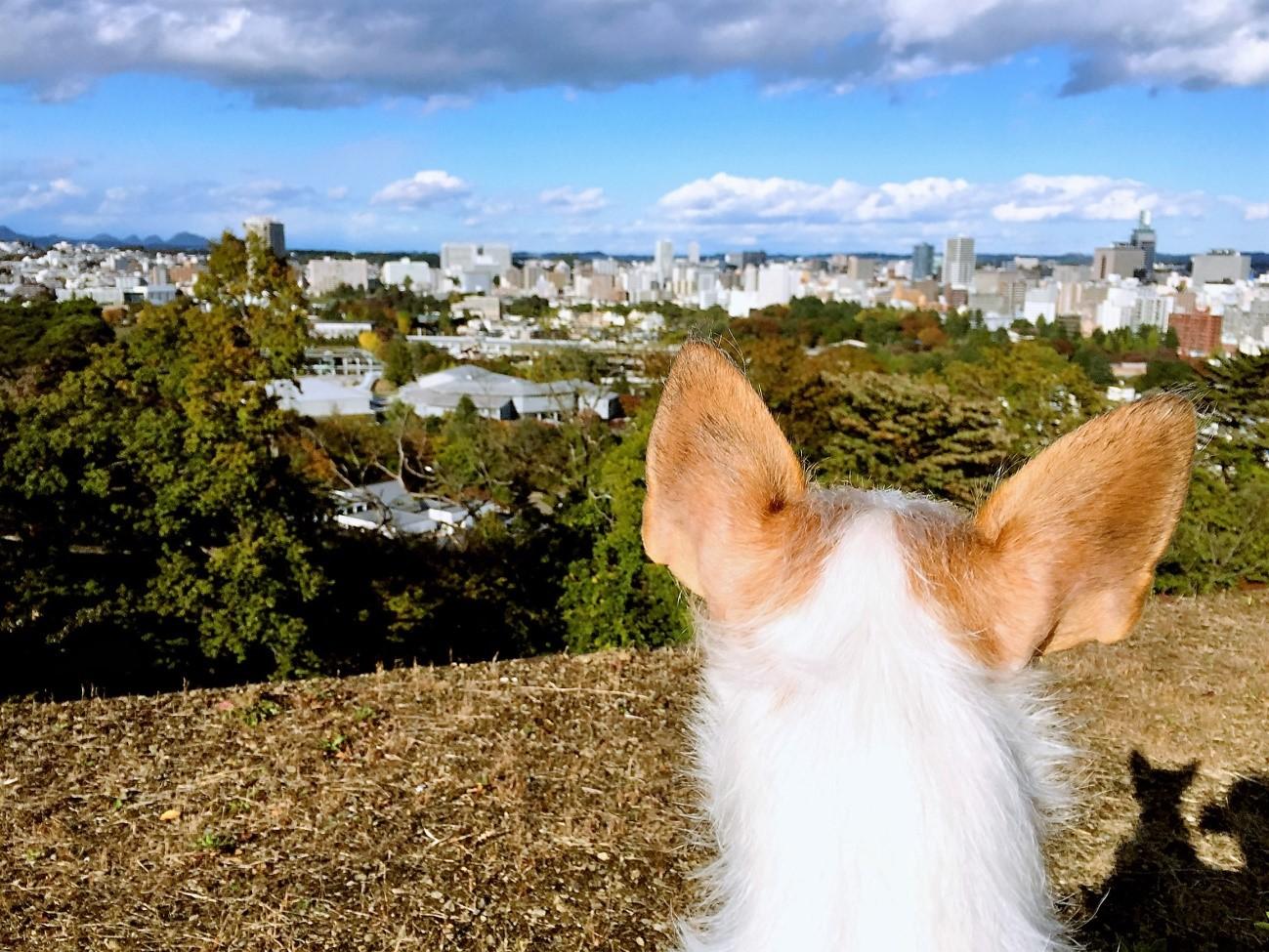 仙台で秋自然散策