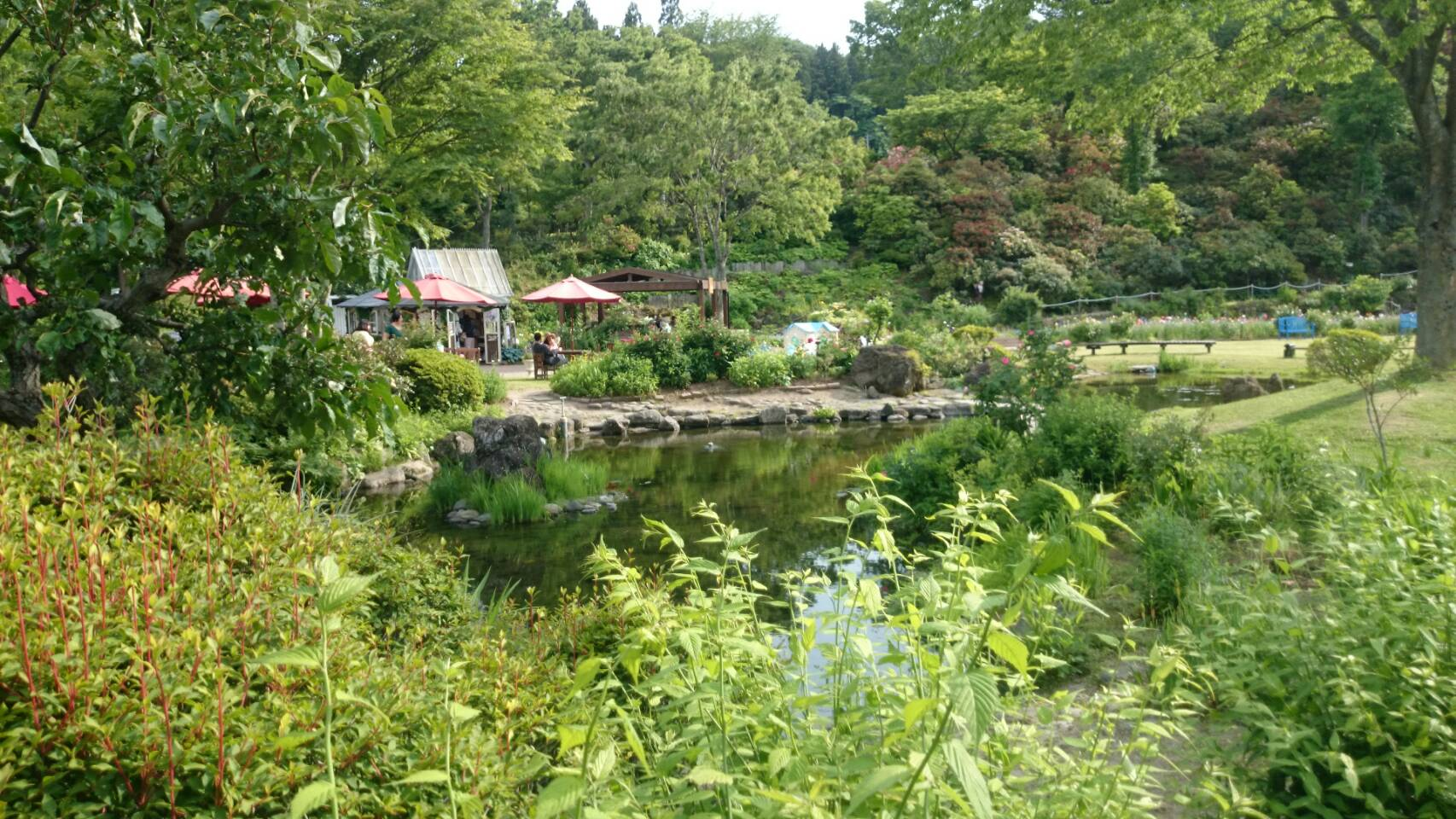 自然の美しさを感じる:泉ボタニカルガーデン