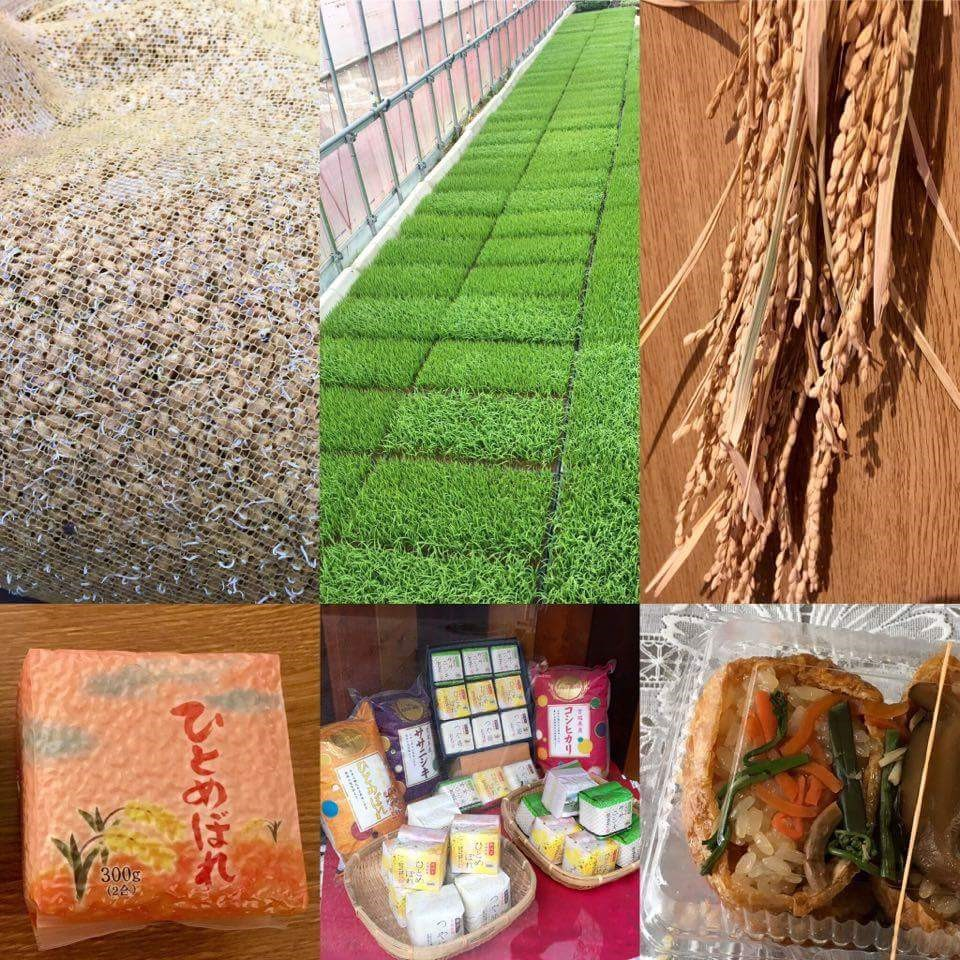 Why is Miyagi Prefecture rice so delicious? An interview with a Graduate Student from London