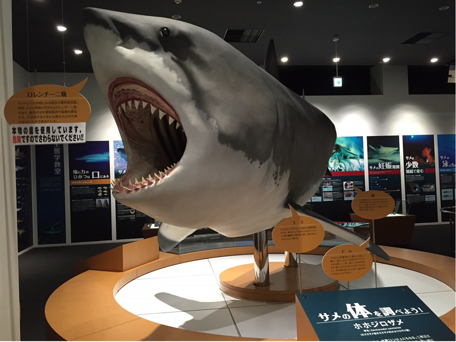 Experience the  adventures Kesennuma shark museum!