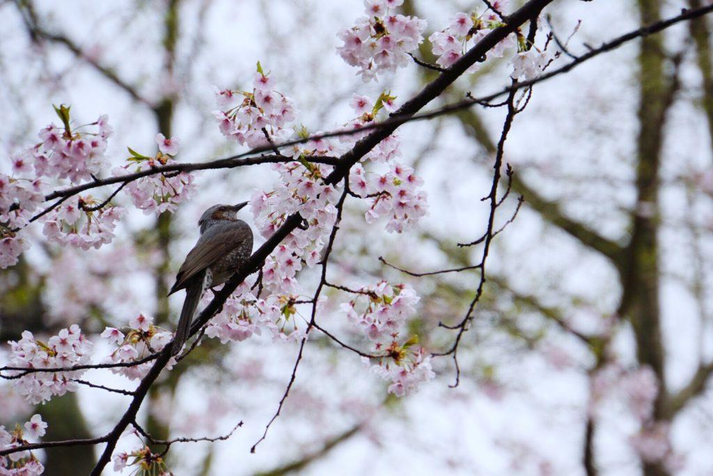 祭に桜に神社にお城!? 圧倒的コンテンツの千秋公園 part1