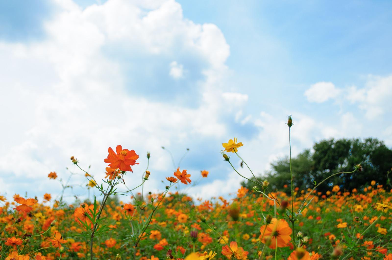仙台で自然を感じられる場所3選