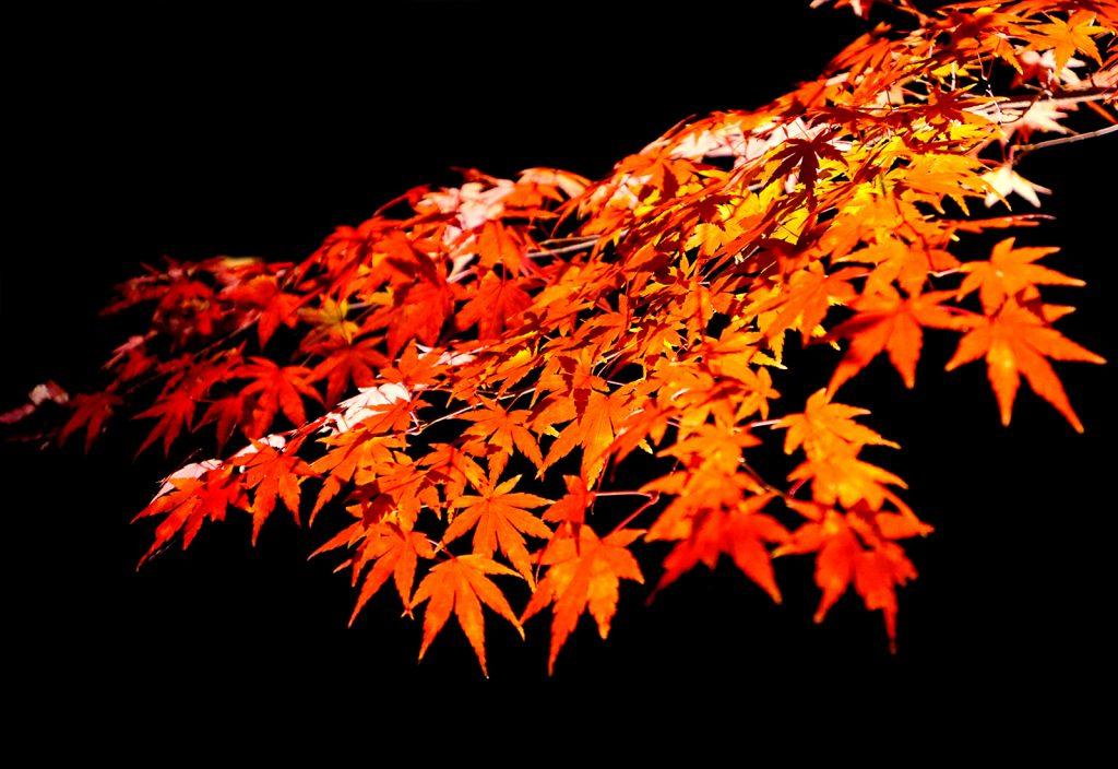 蔵王の紅葉を見るならここ!おすすめ紅葉スポット6選【最新版】
