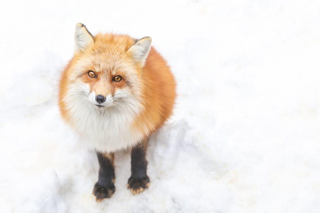 ไปหมู่บ้านสุนัขจิ้งจอกที่ซาโอะ จังหวัดมิยากิแล้วอยากพักค้างคืน! 10 ที่พักแนะนำ