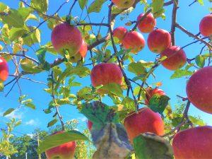 คู่มือแนะนำการเก็บผลไม้ในบริเวณรอบซาโอฉบับสมบูรณ์
