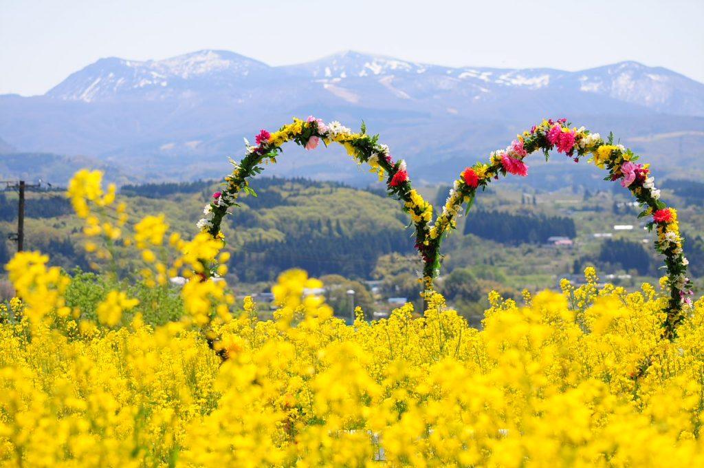 【蔵王】春の花々を楽しむおすすめ穴場スポット5選