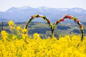 [ซาโอ] 5 สถานที่แนะนำสำหรับเพลิดเพลินกับดอกไม้ในฤดูใบไม้ผลิที่ไม่ค่อยมีใครรู้จัก